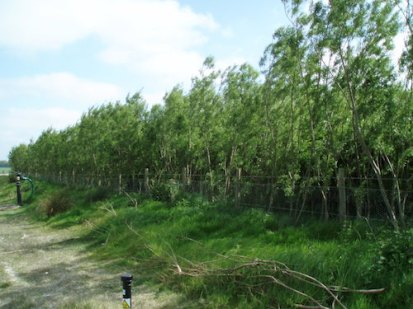 Willows fed on wastewater!